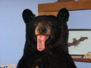 April_Fool's_Bear