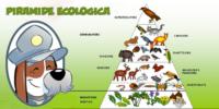 Piramide Ecologica