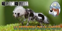 La Formica Panda